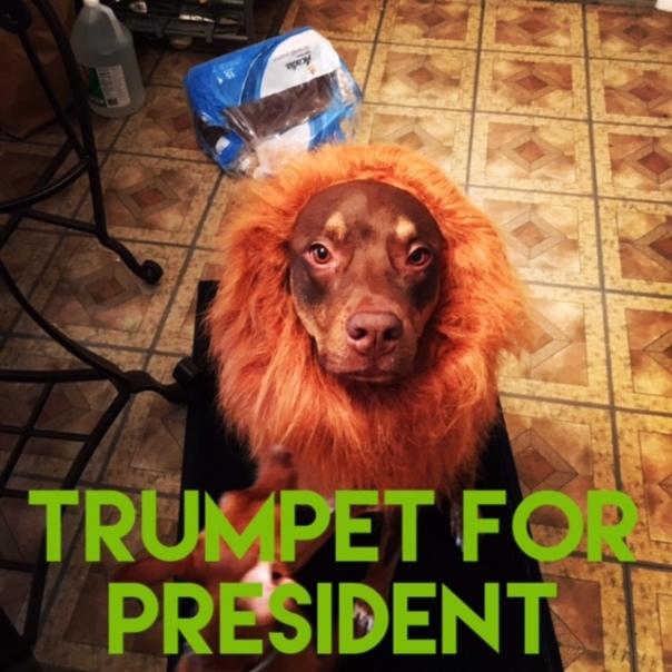 trumpet-forpresident